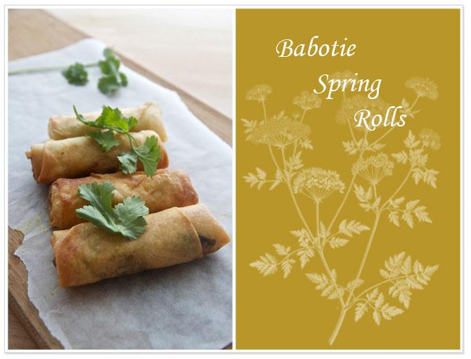 Bablotie-spring-rolls-with-coriander