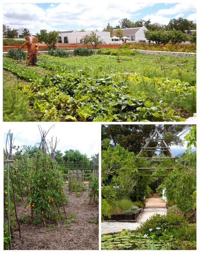 Gardens of Babylonstoren