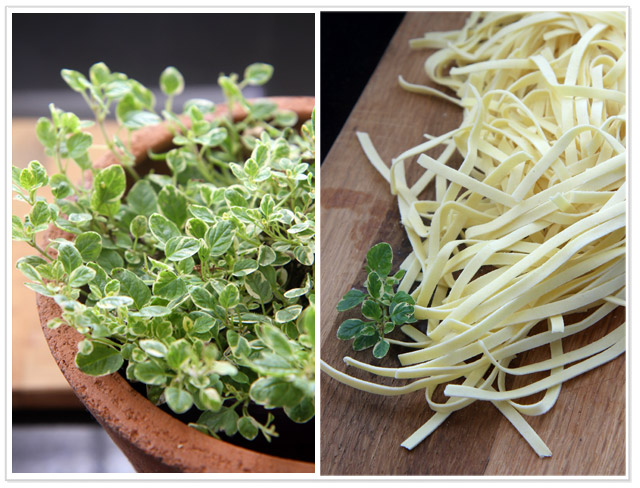 Lemon thyme and pasta